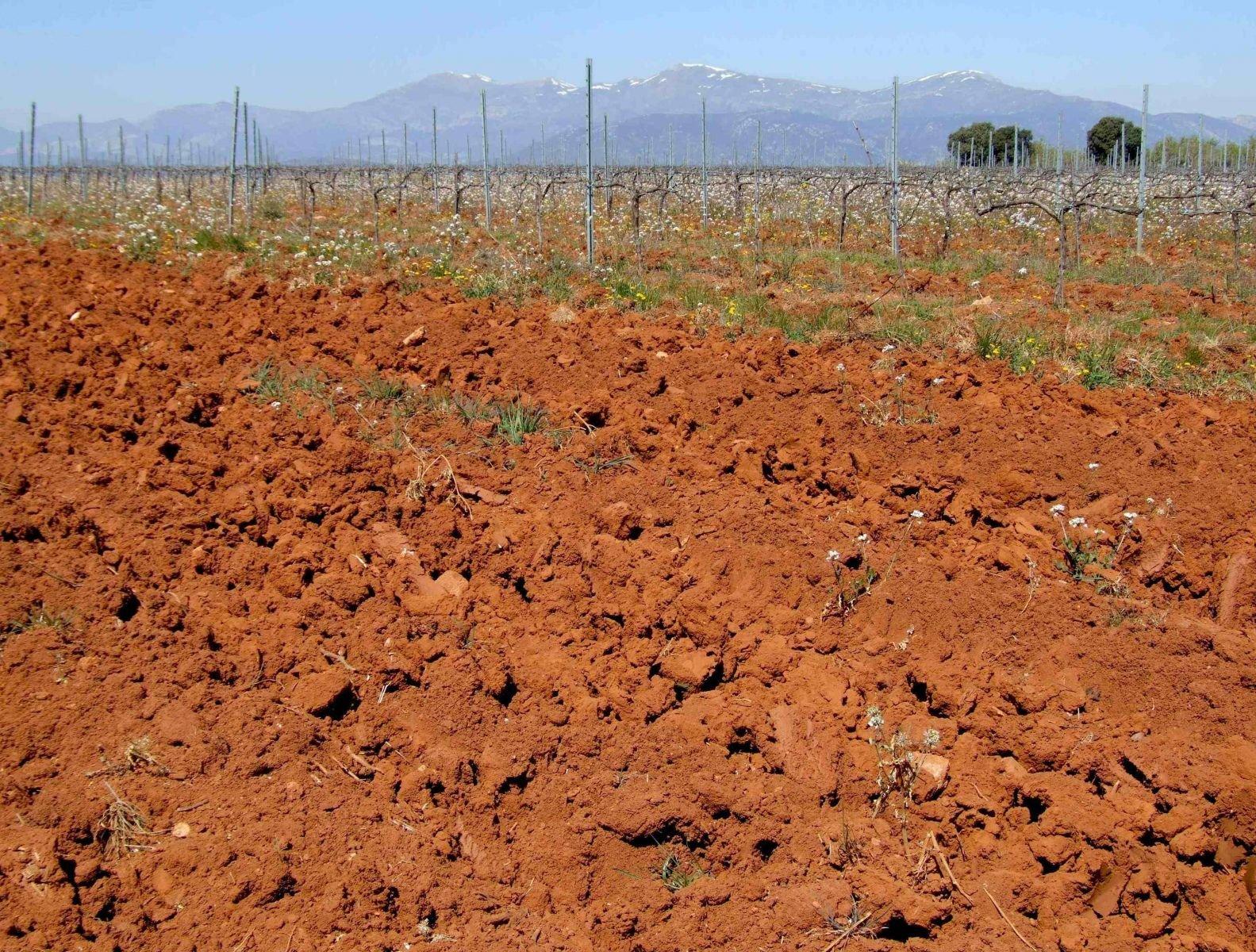 El papel de los suelos como sumideros de carbono revista for Como esta constituido el suelo