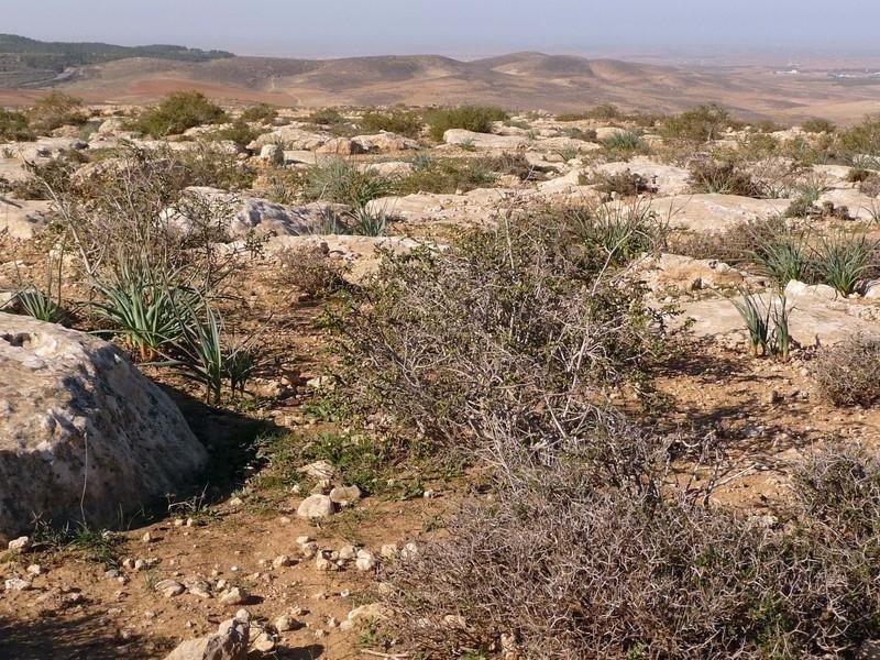 Figura-2 Plantas rastreras en zona árida - Revista del Aficionado a ...